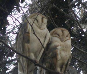 CuriOdyssey zoo: owls
