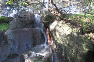 waterfall at CuriOdyssey zoo