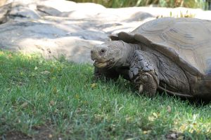 Tortoise at Happy Hollow in San Jose