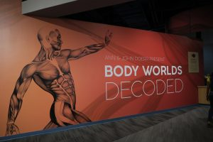 sign for Body Worlds Decoded at The Tech Museum in San Jose