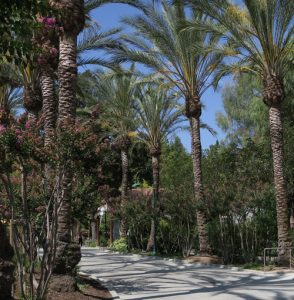 palm tree-lined walkway at Gilroy Gardens